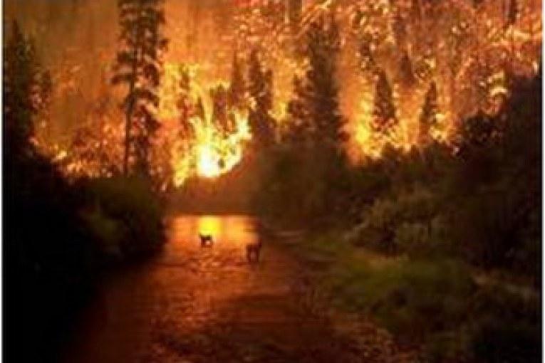 Orman yangınları kaçınılmaz mı? Ahmet Demirtaş