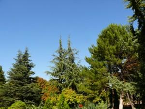 Fotoğraf 3: 7. No binanın bakımlı bahçesi