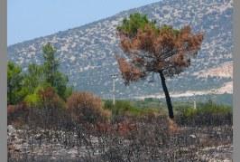 Yönetim Yetersiz, Çaresiz ve Sorumluluktan Kaçıyor- Ahmet Demirtaş