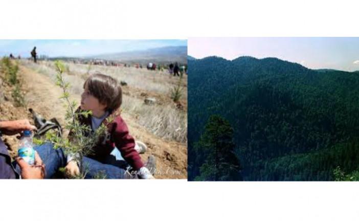 Ağaç Bayramı Mı, Dünya Ormancılık Günü Mü?